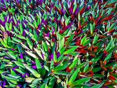 Barbados Blooms
