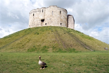 York Castle (& friend)